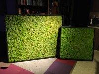 Озеленение. Фитостены. Панели из ягеля. Мох с доставкой