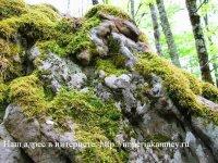Природный камень для Ландшафта