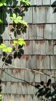 Деревянная черепица из колотой лиственницы, дранка, гонт, шиндель L=400мм