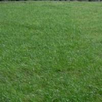 Семена газонных трав (Россия), уп. 10 кг