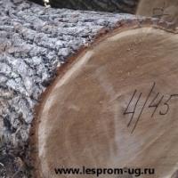 Лафет дубовый дуб черешчатый 30-55см оптом.