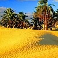 Песок речной в мешках и валом с доставкой 8910-146-60-94