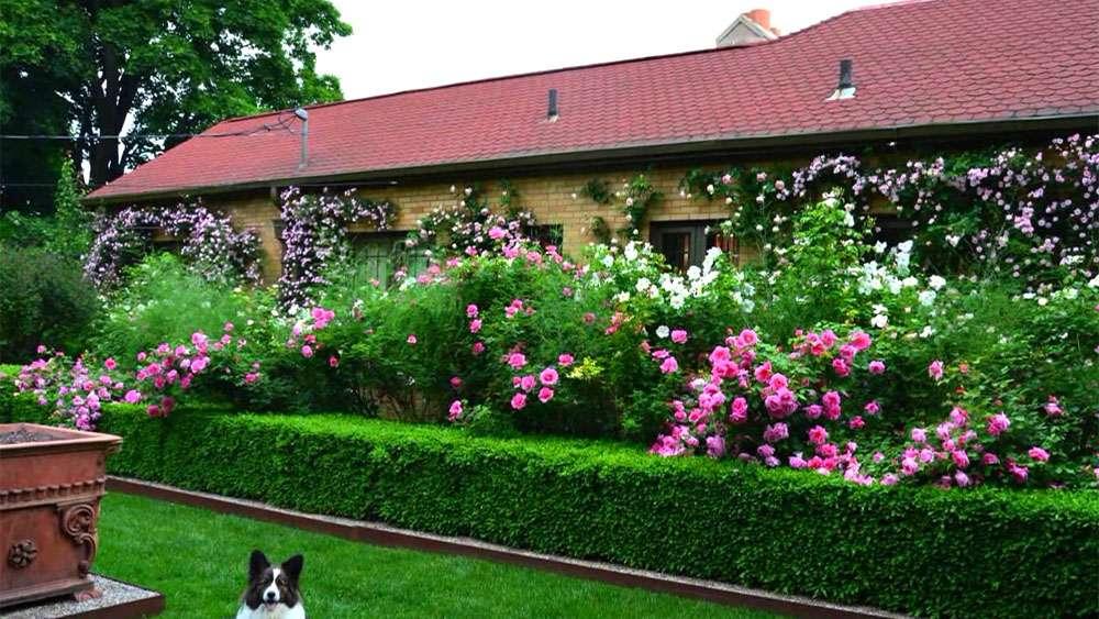 Живые изгороди (забор из живых цветов)