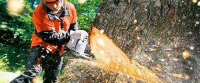 Как правильно срубить дерево