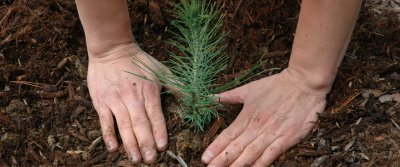 ТОП-5 идей подарков ко Дню работника леса от AliExpress