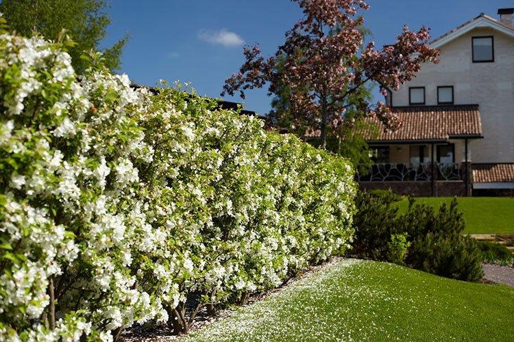 Идея для живой изгороди: цветущая стена фото 2