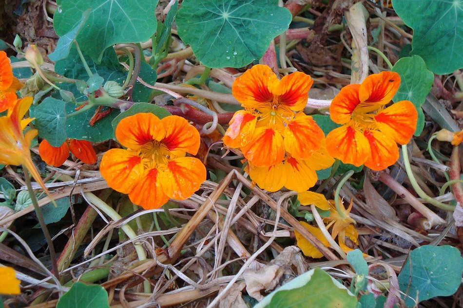 Какие цветы посадить на даче