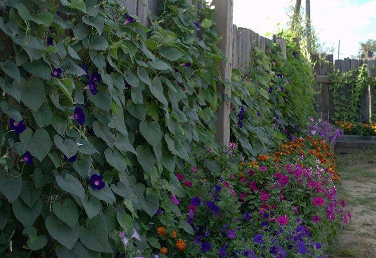 Идея для живой изгороди: старый забор фото 1