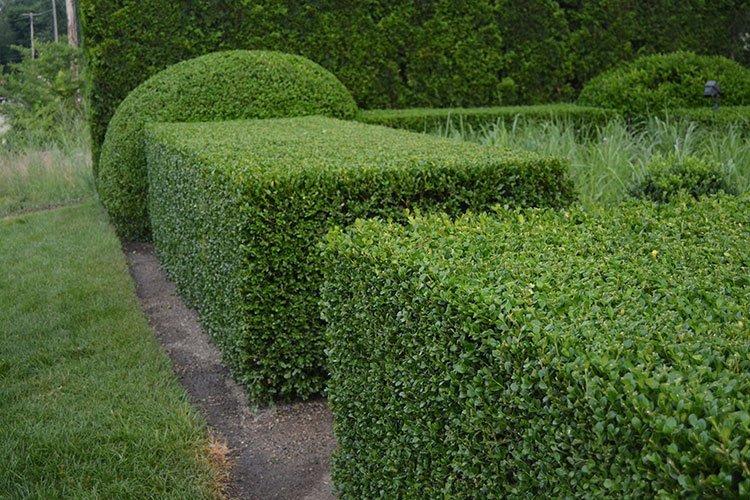 Идея для живой изгороди: необычные формы фото 2