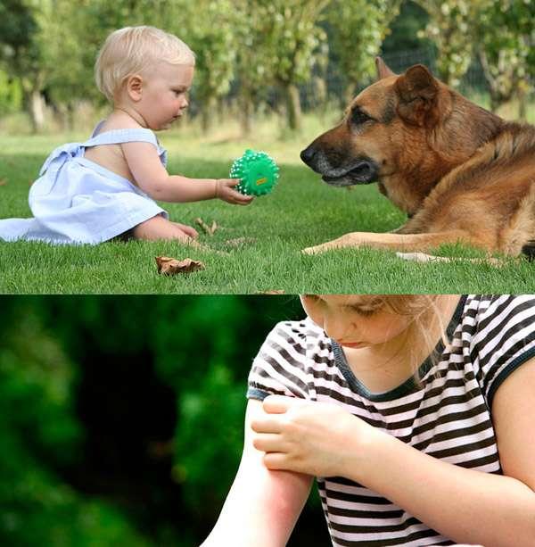 Объясните ребенку правила поведения с животными