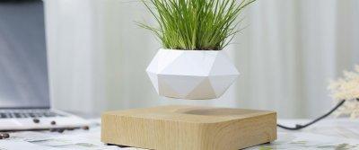 5 красивых и оригинальных решений для домашних растений с AliExpress