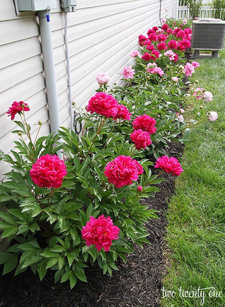 Красивая клумба с цветами двух разных цветов
