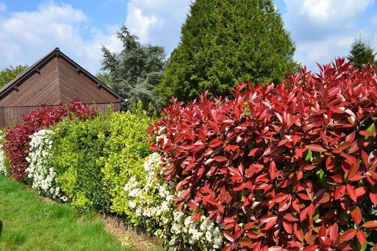 Идея для живой изгороди: дикий сад фото 1