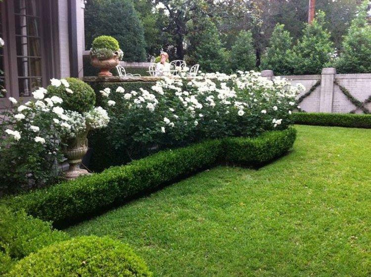 Идея для живой изгороди: изгородь-бордюр фото 2