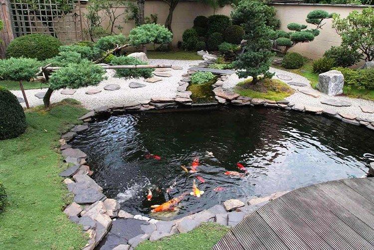 декоративный пруд на даче для разведения и содержания рыб