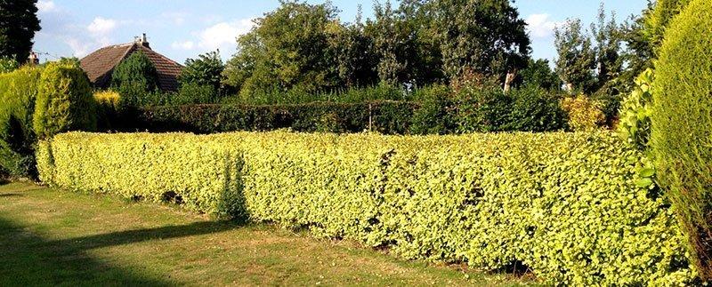 bushes-05