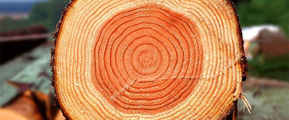 Породы древесины, используемые в строительстве