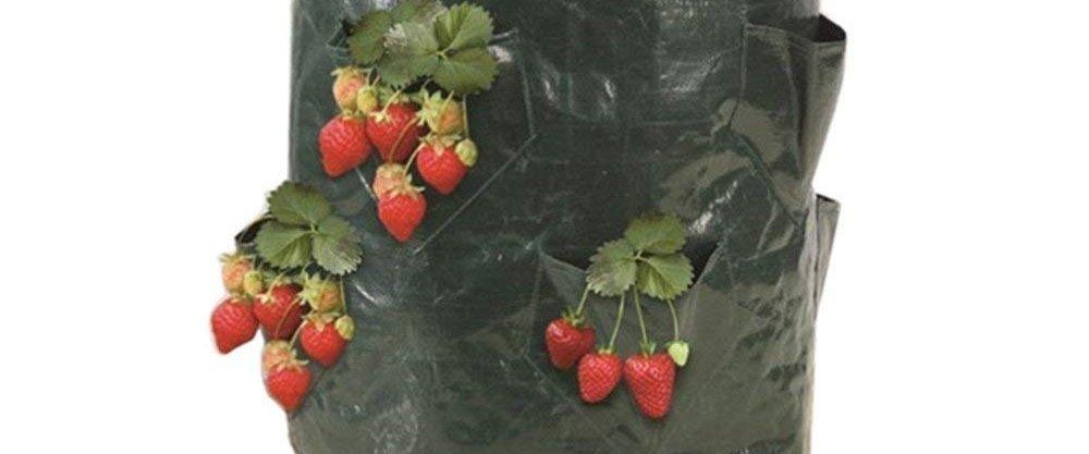 5 супер-помощников для дачников в осеннем саду от AliExpress