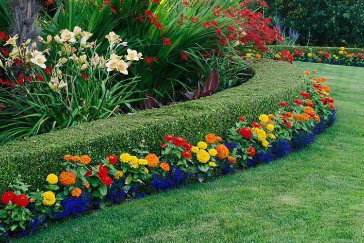 Идея для живой изгороди: цвет фото 2