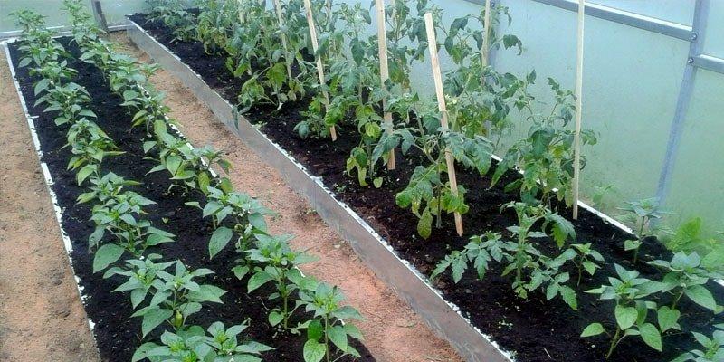 Грядки из оцинкованной стали для томатов и перцев