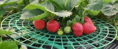 5 годных приобретений для огорода с AliExpress