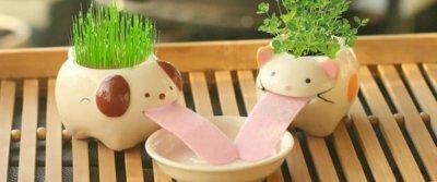 5 крутых приобретений для комнатных растений с AliExpress