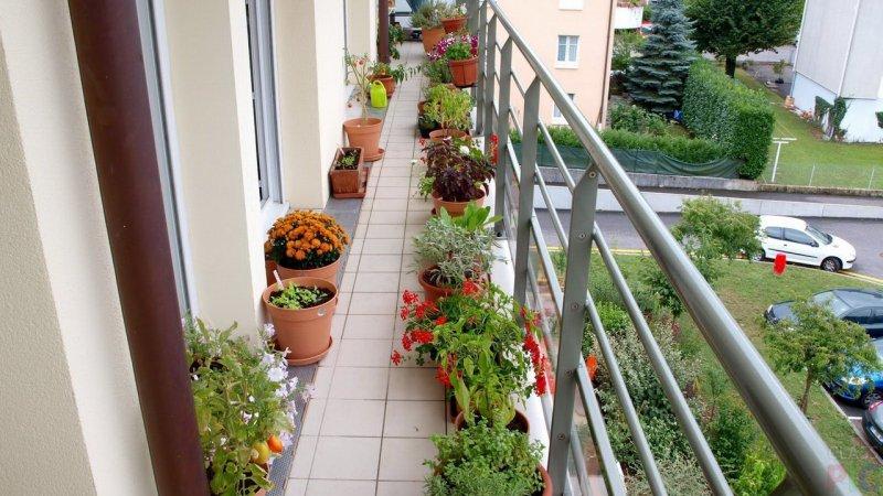 dekor-balkona-zhivymi-tsvetami