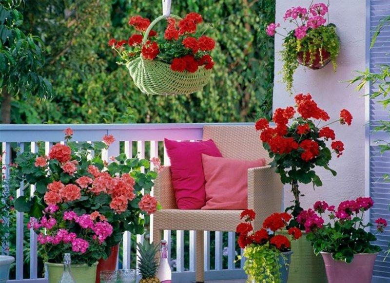 cvety-na-balkone-nazvaniya-sovety-po-raspolozheniyu-61