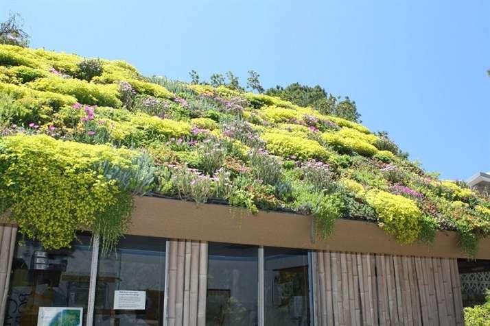 Сад на крыше или как озеленить дом своими руками