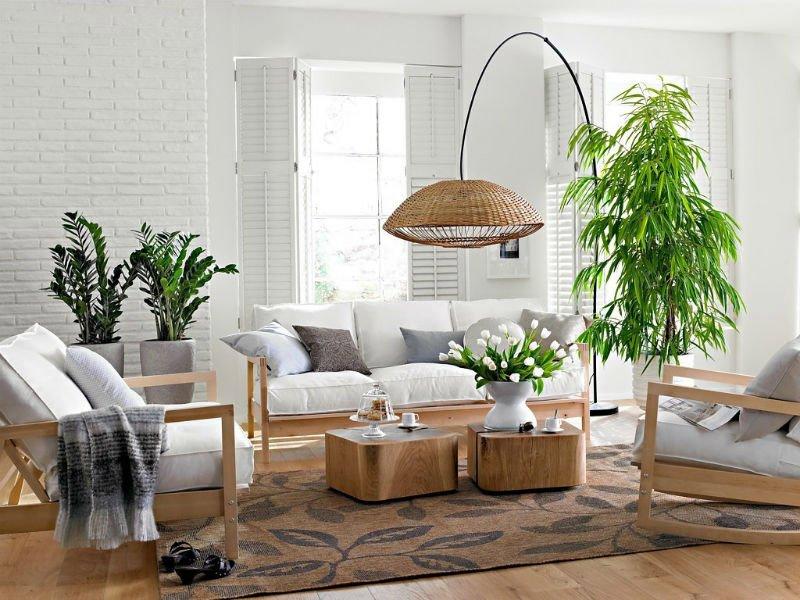 Живые растения в интерьере