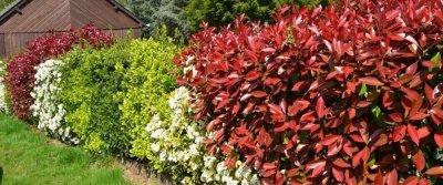 Кустарники для живой изгороди: названия и фото
