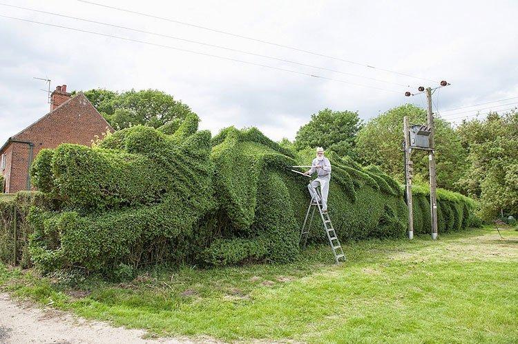 Идея для живой изгороди: необычные формы фото 1