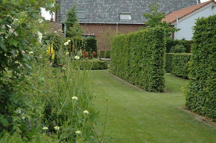 Идея для живой изгороди: живые стенки фото 1